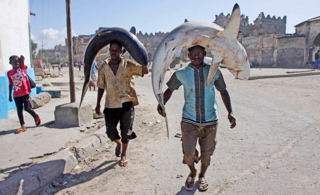 Somali fishermen carry their catch on their heads as they walk to the market in Mogadishu, Somalia, Friday May, 17, 2013, (AP Photo/Farah Abdi Warsameh)